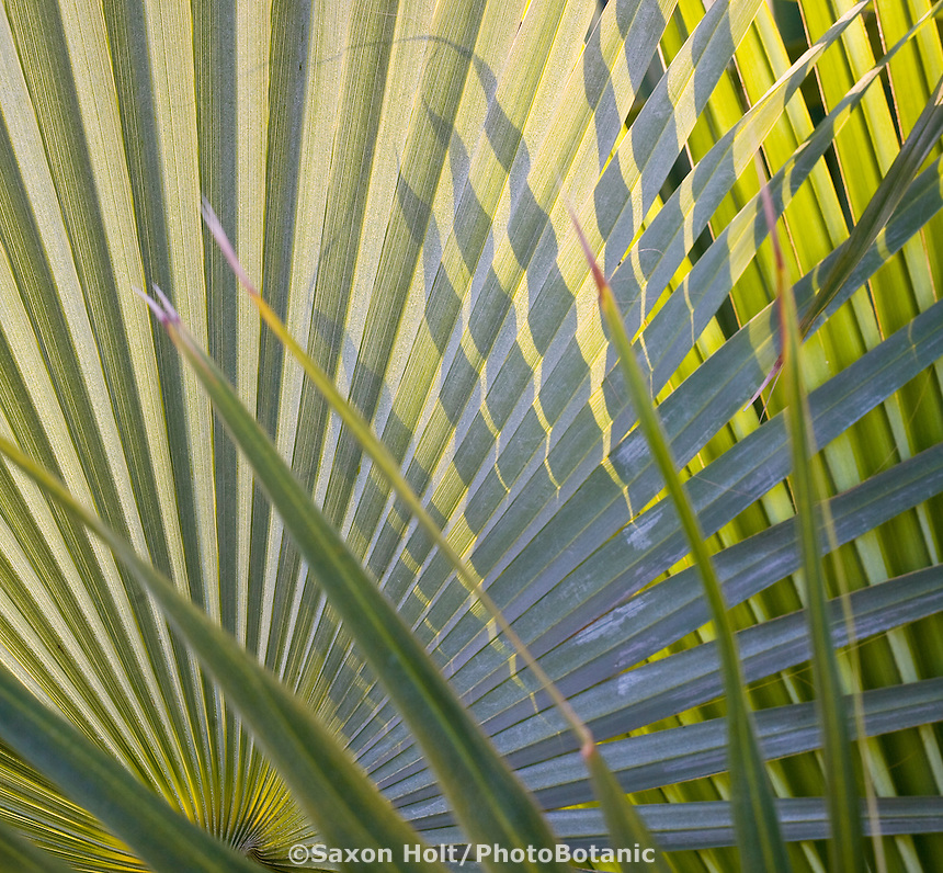 Backlit palm leaves with sun and shadow patterns