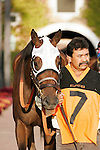 Unusual Heatwave walking into the paddock for the Real Good Deal Stakes at Del Mar Race Course in Del Mar, California on August 3, 2012.