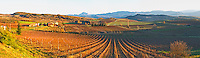 View over the vineyards at Conhilac de la Montagne Limoux. Languedoc. Evening sunshine. France. Europe. Mountains in the background.
