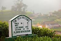 Sri Lanka, Ceylon, Central Province, Nuwara Eliya, Tea Factory signage