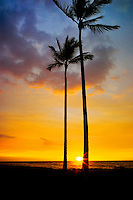 Palm trees and sunset. Hawaii, The Big Island.