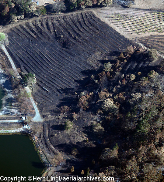 Vineyard burned by the 2020 Glass wildfire, Napa County, California