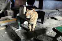A cat in a home near the town of Heishui on the south-east edge of the Tibetan Plateau in Sichuan Province, western China.