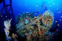 Diving Micronesia Photos
