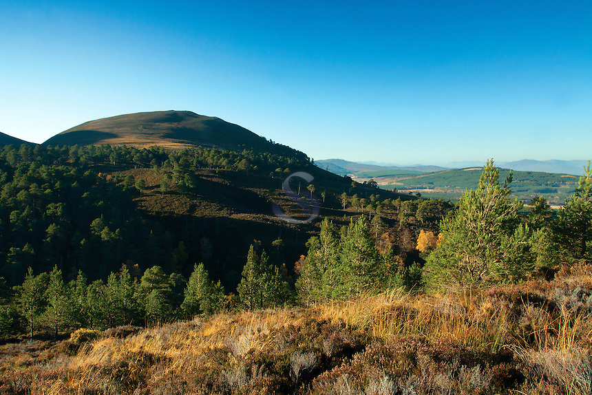Invereshie and Inchriach National Nature Reserve, Glen Feshie, Cairngorm National Park