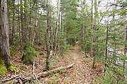 The abandoned railroad bed of the Beebe River Railroad, near the site of logging Camp 11 in the Sandwich Range Wilderness of Waterville Valley, New Hampshire. This railroad was a logging railroad in operation from 1917-1942.