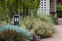 Foliage garden border with variegated lavender 'Meerlo'; Gamble Garden, Palo Alto, California