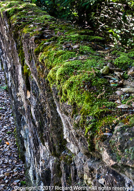 A moss covered rock wall, green over shades of gray and brown, along a path at Cull Canyon Regional Recreation Area in Castro Valley, California