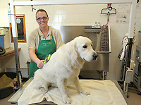 FAO JANET TOMLINSON, DAILY MAIL PICTURE DESK<br />Pictured: A dog is groomed Monday 14 November 2016<br />Re: The Dog House in the village of Talog, Carmarthenshire, Wales, UK
