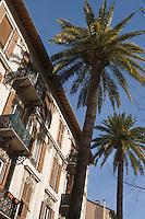 Europe/France/Provence-Alpes-Côte d'Azur/06/Alpes-Maritimes/Nice: Maison et Palmier