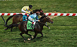 MAY 16, 2015: Watsadachances wins the Stella Artois Gallorette with Javier Castellano aboard at Pimlico Race Course in Baltimore, Maryland. John Voorhees/ESW/Cal Sport Media