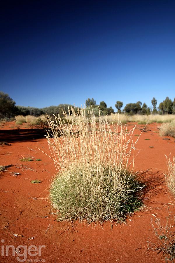 Spinifex in the Red Centre, Australia