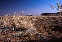 Natura in Namibia:, bottiglia nel deserto bottke in the desert