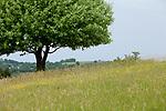 Europa, DEU, Deutschland, Baden-Wuerttemberg, Schwaebische Alb, Bissingen an der Teck, Albtrauf, Baum, Natur, Umwelt, Landschaft, Landschaftsfotos, Landschaftsfotografie, Landschaftsfoto, <br /> <br /> [Fuer die Nutzung gelten die jeweils gueltigen Allgemeinen Liefer-und Geschaeftsbedingungen. Nutzung nur gegen Verwendungsmeldung und Nachweis. Download der AGB unter http://www.image-box.com oder werden auf Anfrage zugesendet. Freigabe ist vorher erforderlich. Jede Nutzung des Fotos ist honorarpflichtig gemaess derzeit gueltiger MFM Liste - Kontakt, Uwe Schmid-Fotografie, Duisburg, Tel. (+49).2065.677997, ..archiv@image-box.com, www.image-box.com]