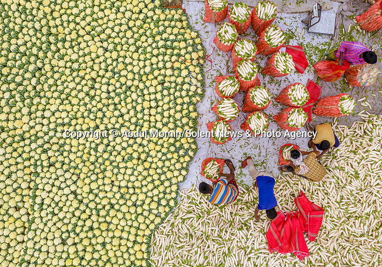 Pictured: The cauliflowers (left) and white radishes<br /> <br /> Aerial shots show millions of cauliflowers and white radishes arranged at a market.  The market covers an area of around 2km, where the vegetables are sold and packed into jute sacks ready for transportation.<br /> <br /> The produce is grown all over northern Bangladesh, and the pictures were taken in Shibganj, in the Upazila district of the country.  SEE OUR COPY FOR DETAILS.<br /> <br /> Please byline: Abdul Momin/Solent News<br /> <br /> © Abdul Momin/Solent News & Photo Agency<br /> UK +44 (0) 2380 458800