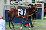 February 27, 2021 #7, Spielberg in the paddock for the Southwest Stakes (Grade III) at Oaklawn Racing Casino Resort in Hot Springs, Arkansas. Ted McClenning/Eclipse Sportswire/CSM