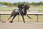 #140Fasig-Tipton Florida Sale,Under Tack Show. Palm Meadows Florida 03-23-2012 Arron Haggart/Eclipse Sportswire.