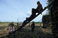 jbo70193 asia Philippines Negros agriculture biomass energy landless labourer people work on sugarcane sugar cane plantation hazienda.Asien Philippinen Negros Landwirtschaft landlose Landarbeiter mit Machete bei Zuckerrohrernte Zucker Zuckerrohr Biomasse Bagasse Energie Silhouette .copyright Joerg Boethling/agenda ph. ++49 40 39190714