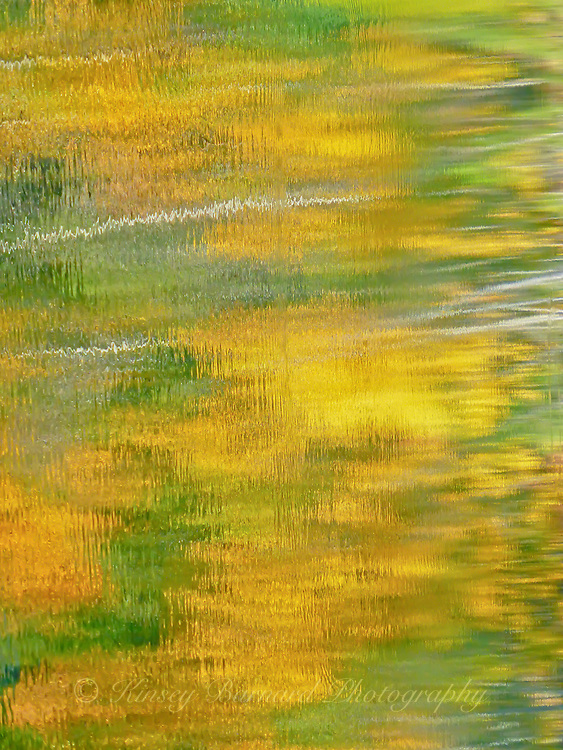 """""""FALL IMPRESSIONS""""<br /> <br /> A Nature's impressionist palette of Fall color reflecting on the waters of a small pond in Montana. The gold and green is provided by aspen trees. The shimmering water provides the impressionism. <br /> <br /> ORIGINAL 24 X 36 GALLERY WRAPPED CANVAS SIGNED BY THE ARTIST $2,500. CONTACT FOR AVAILABILITY."""