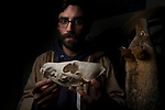 Coyote (Canis latrans) biologist, Jonathan Young, holding skull, Presidio, San Francisco, Bay Area, California