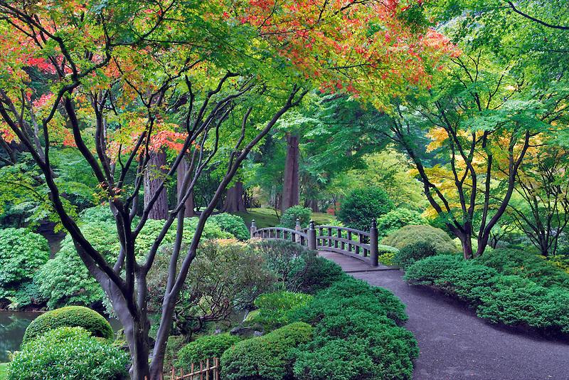 Fall color with bridge in Japanese Gardens. Portland. Oregon