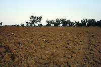 Agricoltura. Agriculture. ...