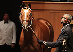 Hip 24 Belle of the Hall consigned by Vinery Sales, sold for $230,000..November 05, 2012.