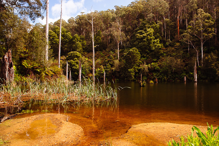 Image Ref: CA593<br /> Location: Lake Elizabeth, Forrest<br /> Date of Shot: 20.10.18