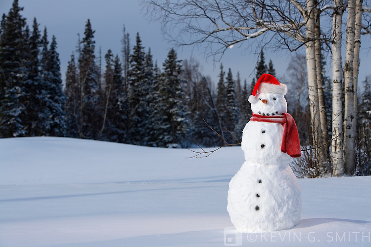 Snowman with red scarf and santa hat standing in snowy meadow, birch trees and spruce forest in back ground.