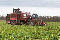 16.11.2020 Contractor lifting sugar beet in South Lincolnshire <br /> ©Tim Scrivener Photographer 07850 303986<br />      ....Covering Agriculture In The