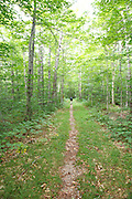 Man walking down the old Bartlett and Albany Railroad in Bartlett, New Hampshire USA. This was a logging railroad in operation from 1887 - 1894