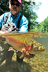 FLY FISHING FOR RAINBOW TROUT IN FRESHWATER, 2009