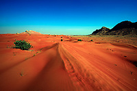 Dune-riding tracks on the beautiful red sand dunes, under a blue sky on a hot day, in the Arabian desert, near Dubai, United Arab Emirates, Asia