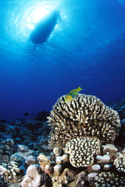 Underwaer view of a boat floating above a coral reef off Rorotonga, Cook Islands, in the Sout Pacific.