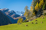 Austria, East-Tyrol, High Tauern National Park, Virgen Valley, Praegraten at Grossvenediger, district Hinterbichl: at bakground Hohe Tauern mountains | Oesterreich, Osttirol, Nationalpark Hohe Tauern, Virgental, Praegraten am Grossvenediger, Ortsteil Hinterbichl: im Hintergrund die Hohen Tauern