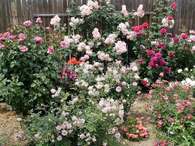 Rose Garden, Scentsational mini, Secret Recipe mini, Fisherman's Friend, Bow Bells, Barbra Streisand