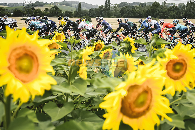 The peloton passes by sunflower fields during Stage 17 of the 2021 Tour de France, running 178.4km from Muret to Saint-Lary-Soulan Col du Portet, France. 14th July 2021.  <br /> Picture: A.S.O./Pauline Ballet   Cyclefile<br /> <br /> All photos usage must carry mandatory copyright credit (© Cyclefile   A.S.O./Pauline Ballet)