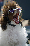 YAWNING DOG WEARING SUNGLASSES