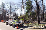 Clearing the way and installing new utility lines <br />  Andover Drive, Magalia <br /> Before power could be completely restored to Ridge communities, burned and diseased trees needed to be removed. Ponderosa pines can reach heights of upwards of 200 feet. Removing thousands of them that could impact power lines was a lengthy process. The care and amount of time required to remove the towering pines was compounded by working in an urban environment where the trees had to be removed piece by piece, instead of simply felling them in a forest. <br /> <br /> Power lines were not the only utility lines impacted. The lower levels on utility poles are typically used by phone and cable companies. Miles and miles of cable and telephone lines needed to be replaced.