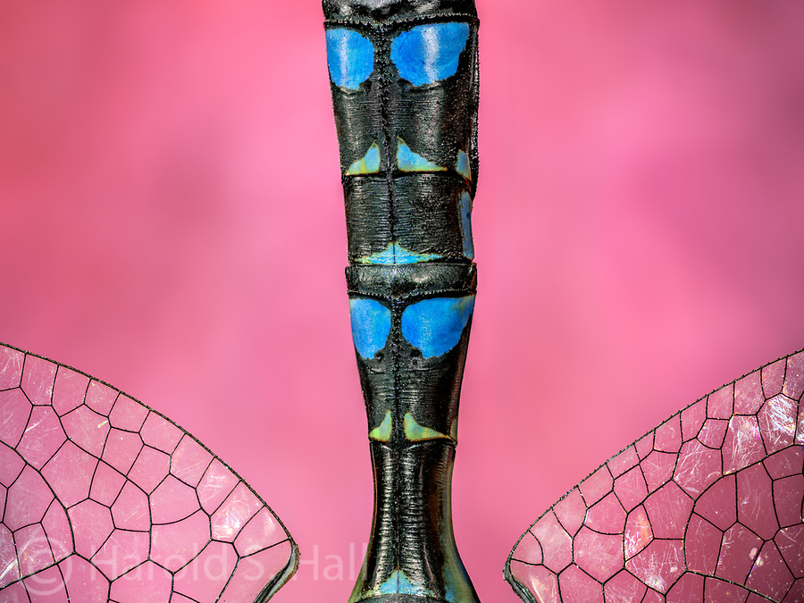 Instead of taking a photo showing the entire body of the dragon fly, I captured the brightly colored markings on the body.  For me, it looked a bit like a totem pole with blue eyed figures on it.
