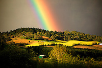 """Barn, mustard field, and rainbow. Near Alpine Oregon. This is a photo illustration. The rainbow has been digitally added to the photo. Please indicate """"Photo Illustration"""" when publishing."""