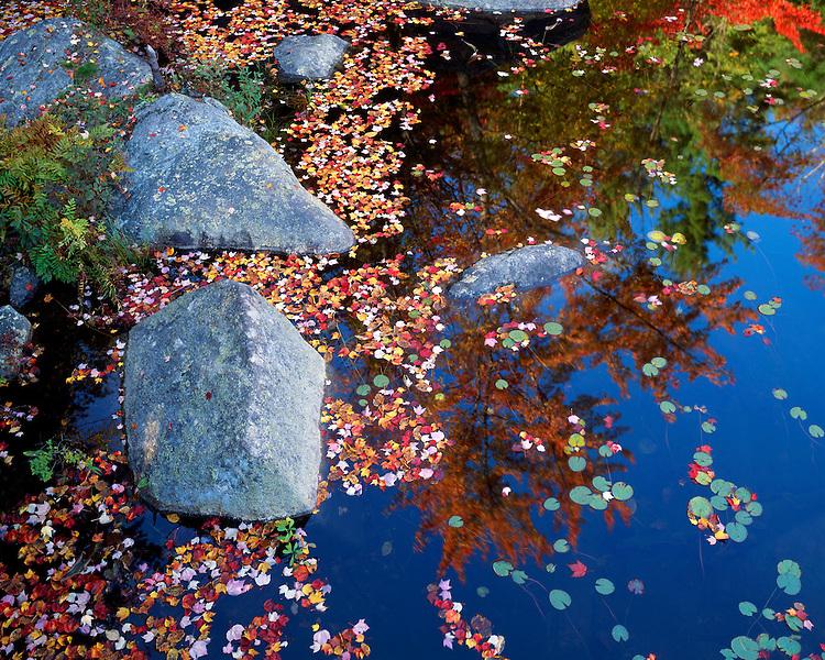 Leaf-covered Crane Pond; Adirondack Park & Preserve, NY