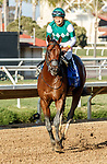 DEL MAR, CA  AUGUST 7:  #3 Pappacap, ridden by Joe Bravo, returns to the connections after winning the Best Pal Stakes (Grade ll) on August 7, 2021 at Del Mar Thoroughbred Club in Del Mar, CA.(Photo by Casey Phillips/Eclipse Sportswire/CSM)