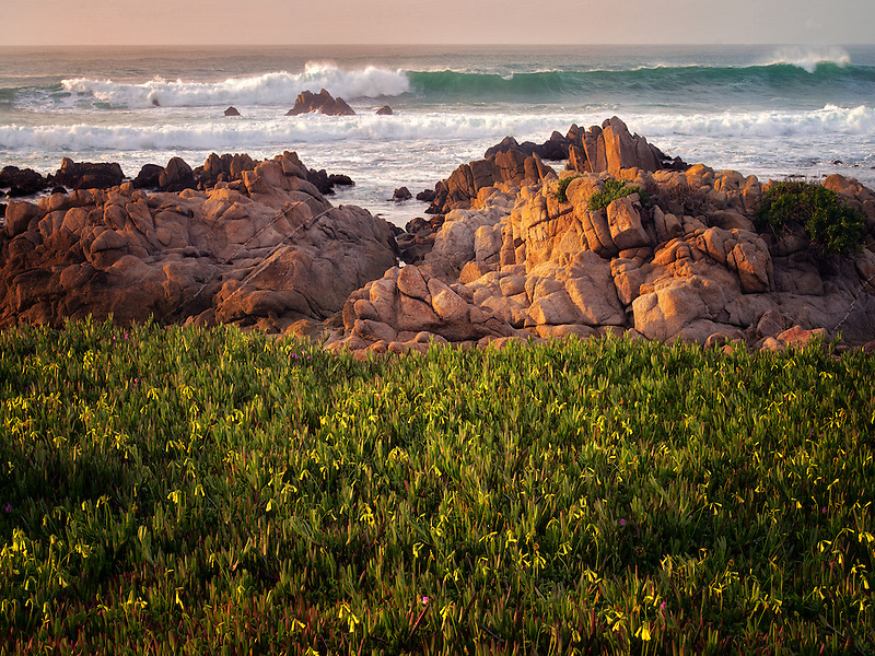Flowers and ocean. Pacific Grove, California