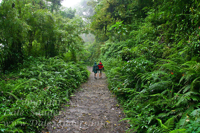 Tourist on trail, Monteverde Cloud Forest Biological Reserve, Costa Rica. Model Released