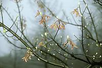 Oak seedlings in early spring after rain