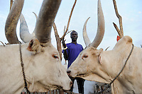 SOUTH SUDAN  Bahr al Ghazal region , Lakes State, Dinka shepherd with Zebu cow in cattle camp near Rumbek / SUED-SUDAN  Bahr el Ghazal region , Lakes State, Dinka Hirten mit Zeburindern im cattle camp