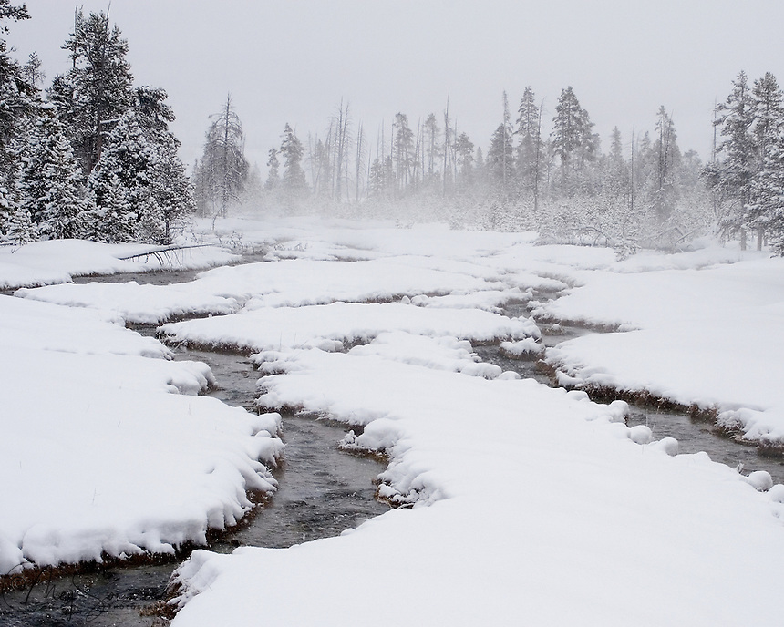 The thermal heat in Yellowstone's cold winter, produces and eerie steam and helps to keep the waters open for the benefit of all who have not migrated south. Rabbit Creek, north of the Old Faithful area in west central Yellowstone NP