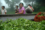 Tea leaves ready to be transported to the factory by a trailor.