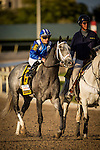 HALLANDALE FL - FEBRUARY 27: Mohaymen #6, ridden by Junior Alvarado in the post parade of the Xpressbet.com Fountain of Youth Stakes at Gulfstream Park on February 27, 2016 in Hallandale, Florida.(Photo by Alex Evers/Eclipse Sportswire/Getty Images)
